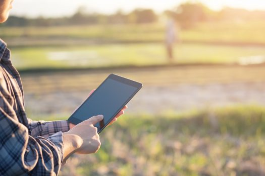 agriculture technology, farmer using tablet on agriculture field and empty screen of tablet.